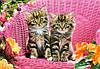 Пазл Castorland Kittens on Garden Chair, 1000 эл., фото 2