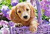 Пазл Castorland Puppy in Basket, 1000 эл., фото 2