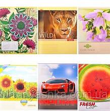 Тетрадь 60 листов клетка Яркие рисунки