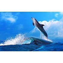 Стіл кухонний скляний Прямокутний проходить полицею Dolphin 91х61 *Еко (БЦ-стіл ТМ), фото 3