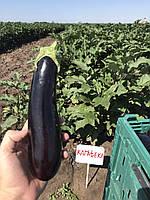 Урожай насіння баклажана Каратеке F1 від офіційного дистриб'ютора в Україні BT TOHUM