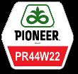 Рапс озимый Pioneer PR44W22