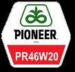 Рапс озимый Pioneer PR46W20