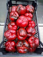 Перець солодкий (болгарський) кубовидний червоний. Перец красый.