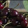 Саженцы вишни оптом