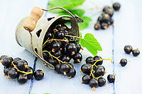 Blackcurrant Seed Butter