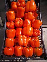 Перець солодкий (болгарський) кубовидний помаранчевий. Перец оранжевый кубовидный.