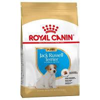 Royal Canin Jack-Russell Terrier Puppy (Роял Канін) - сухий корм для цуценят породи Джек Рассел тер'єр 1,5 кг