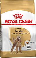 Royal Canin Poodle Adult (Роял Канін) сухий корм для дорослих собак породи Пудель 0,5 кг, фото 1
