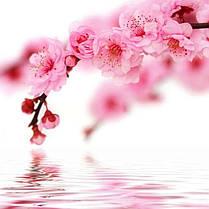 Стіл кухонний скляний Прямокутний проходить полицею Sakura 91х61 *Еко (БЦ-стіл ТМ), фото 3