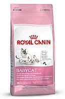 ROYAL CANIN (РОЯЛ КАНИН) BABY CAT 10 КГ (ДЛЯ КОТЯТ ОТ 1 ДО 4 МЕСЯЦЕВ)