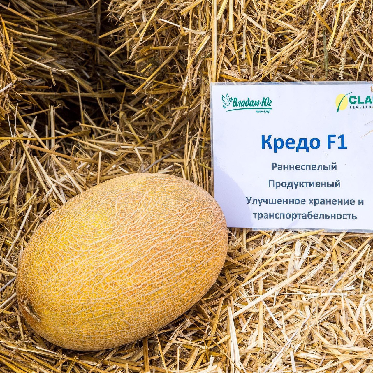 рокамболь купить семена в интернет магазине