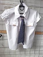 Блузка шкільна дівчаток ( р. 122-146) купити оптом