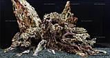 """Композиция из """"Три Дракона"""" для аквариума от 160л, фото 3"""