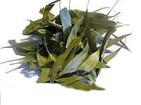 Эвкалипт прутовидный листья 100 грамм (Eucalyptus viminalis, Manna Gum)