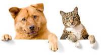 Кошки и собаки: 4 способа адаптировать квартиру