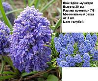 Blue Spike мускари