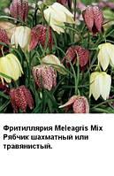 Фритиллярия Meleagris Mix