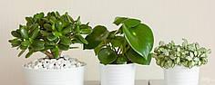 Советы по качественному поливу комнатных растений