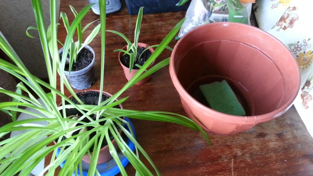 Полив растений своими руками с помощью губки