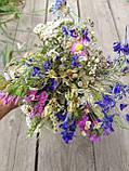 Букет з натуральних сухоцвітів та злаків, h-30 см.,d-13 см., 30 грн., фото 5