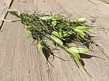 Нігела східна, сухоцвіт, 12 шт. коробочок, h-20 см., 25 грн., фото 7