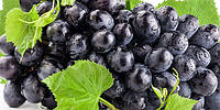 Чёрный виноград, Floressence - 10 мл