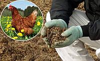 Куриный помет как качественное органическое удобрение