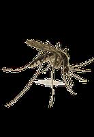 Отпугиватель комаров Buzz-Zapper   Ловушка для комаров, фото 9