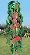 Саженцы Колонновидного персика Медовый(крупноплодный,среднеранний)
