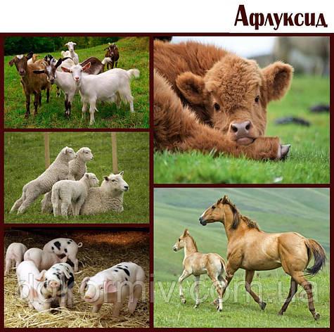 Антидиарейная кормовая добавка - Афлуксид, фото 2