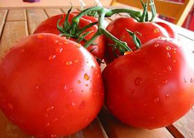 Семена томата детерминантного Полбиг F1 5 г, Bejo