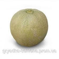 Дыня KS 6191 F1 Kitano 1000 семян