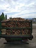 Дрова дубовые колотые., фото 3