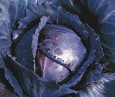 Семена капусты краснокочанной Родима F1(калиброванные), 1000 семян RZ (Рийк Цваан), Голландия