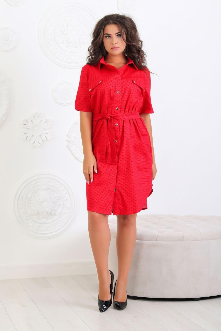 Платье-рубашка с поясом БАТАЛ, арт 101/2, ткань коттон,  красное в горох