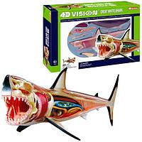 4Д модель белая акула 4D Vision Great White Shark Anatomy Model