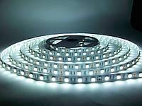 Светодиодная лента SMD 5050 60 LED/m IP20 Premium White MOTOKO, фото 1