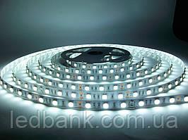 Светодиодная лента SMD 5050 60 LED/m IP20 Premium White MOTOKO