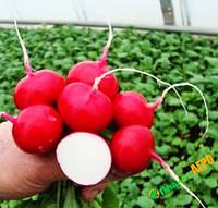 Семена на развес редиса Валери F1( 2.5-2.75), 10 г из проф пакета, RZ (Рийк Цваан), Голландия