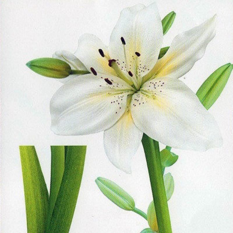 Наклейка, лилия, белая, цветок, интерьерная Декор №17