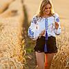 Белая женская рубашка вышиванка Жарптица с синей вышивкой, фото 6