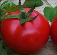 Семена томата Саргас F1, Yuksel seeds 1 000 семян | профессиональные