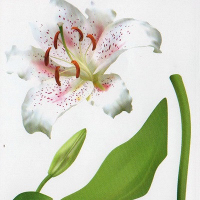 Наклейка, лилия, цветы, интерьерная Декор №19