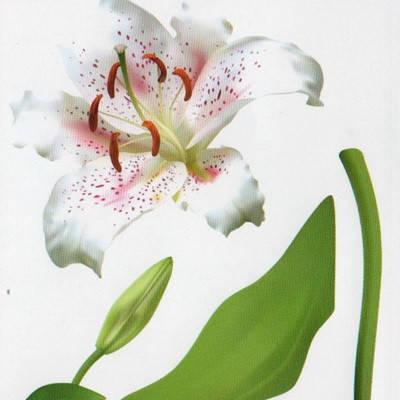 Наклейка, лилия, цветы, интерьерная Декор №19, фото 2