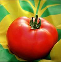 Семена томата Анталия F1, Yuksel seeds 500 семян | профессиональные
