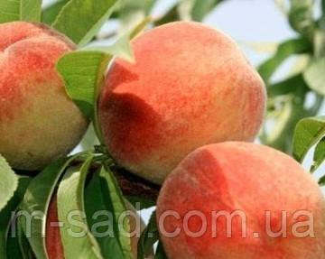 Персик Сан Крест(кисло-сладкий,зимостойкий)
