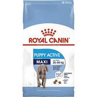 Royal Canin MAXI Junior ACTIVE 15 кг - Корм для щенков до 15 мес. с высокими энергетическими потребностями
