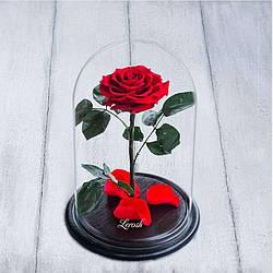 Стабилизированная роза в колбе Lerosh - Premium плюс 33 см, Красная - 138939