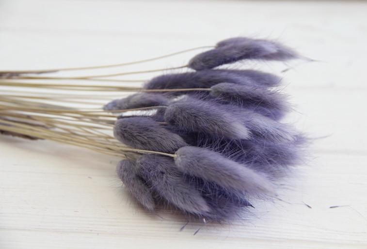 Лагурус стабилизированный , светло - фиолетовый    30 шт